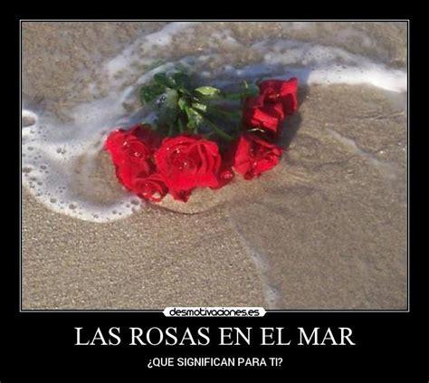 imagenes rosas en el mar fotos de imagenes rosas en el mar imagui