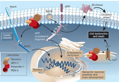 protein 2 abnormal does abnormal amyloid cause alzheimer s