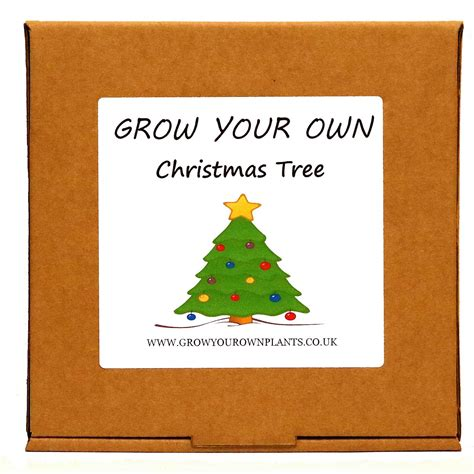 grow your own norway spruce christmas tree plant kit unusual