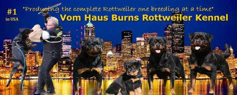 what were rottweilers bred to do rottweiler puppies for sale vom haus burns rottweiler kennel youth rottweilers