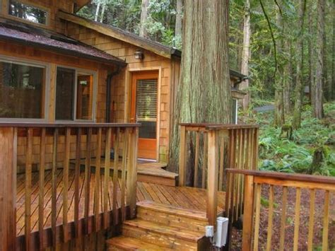 Forest Cabins At Mt Rainier by Forest Cabins Forest Cabins Mt Rainier