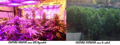 Comment Planter Du Cannabis En Intã Rieur Comment Cultiver Du Cannabis La Faq D 233 Finitive