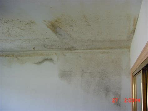 Mould On Ceiling by Csceng Services Mold General Overview
