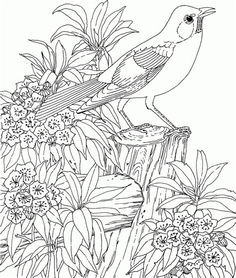 free secret garden coloring pages