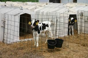 Calf Tel Hutches For Sale Calf Huts Bing Images