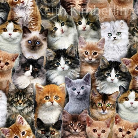 cat wallpaper collage cotton fabric animal fabric adorable pets kitten