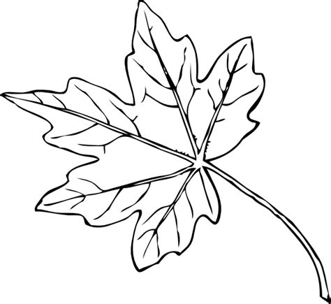 autumn coloring pages 2 coloring pages to print