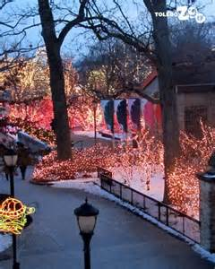 toledo zoo hours lights before 17 best images about toledo zoo on before
