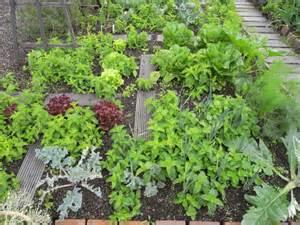 connected opengreens gt gardens gt edible forest rooftopgarden