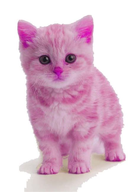 Cats Pink a pink kitten oh my goodness so cats