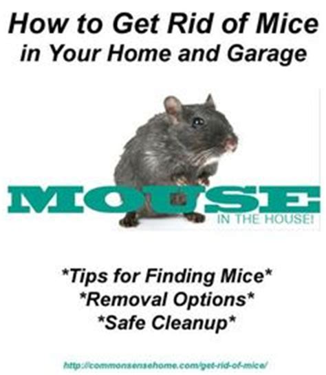 rid mice naturally home remedies mice and rats
