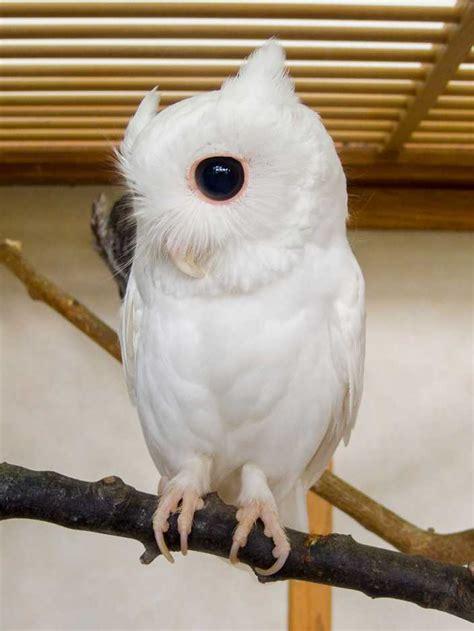 rare albino animals  dont  colors   cool