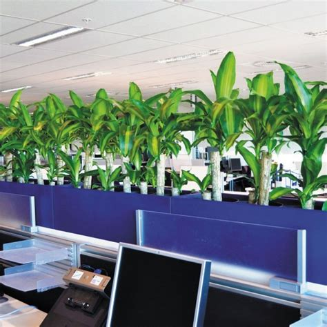 plant partition troughs eco green office plants