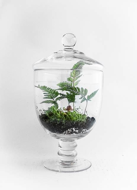 Office Desk Terrarium Desktop Garden Office Desk Accessory Home Decor