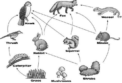 pattern of energy flow within an ecosystem biology study guide 2013 14 schram instructor schram