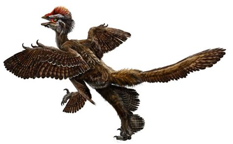 dinosauri volanti feathered dinosaur fossils find has scientists all