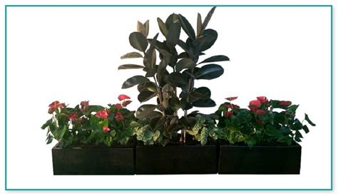 where to buy cheap house plants cheap house plants for sale online