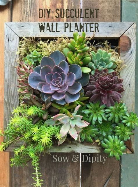 succulent wall planter succulent wall and succulents on