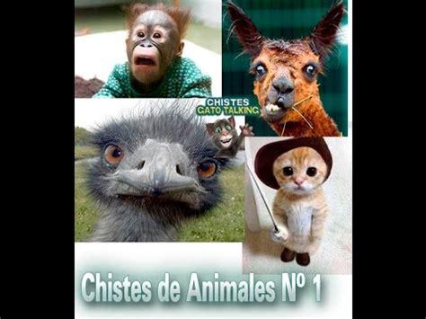 chistes cortos de animales chistes cortos de animales n 186 1 mejores chistes animales