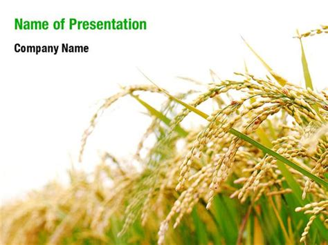 Powerpoint Themes Rice | rice paddies powerpoint templates rice paddies