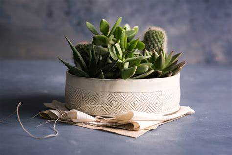 large succulent planter white ceramic planter large succulent planter pot modern