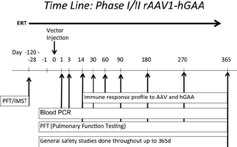 Timeline Of Phase I Ii Clinical Trial For Pompe Disease Following Download Scientific Diagram Trial Timeline Template