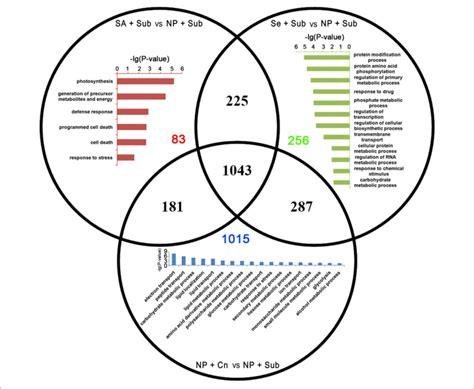 28 Osmosis Diffusion Venn Diagram 28 Images Venn Diagram Diffusion