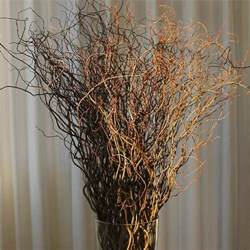 Statice Flowers Curly Willow Branches Green Bulk Fresh