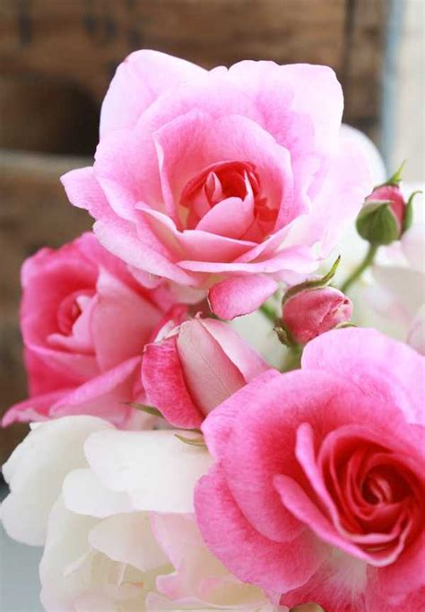 imagenes flores bellas dolce prugne bellas flores para compartir