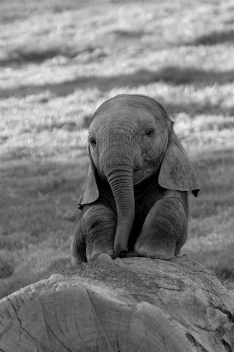 Baby Elephant L cutest baby elephant jodi l milner author