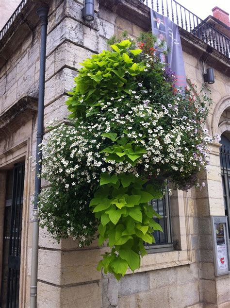hanging window box planters 1000 images about window boxes and hanging baskets on