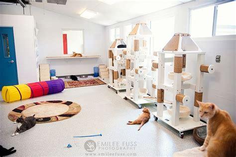 cat room humane society of sarasota county room so cool i