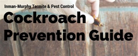 how to prevent cockroaches in bedroom cockroach prevention guide how to stop them before they start