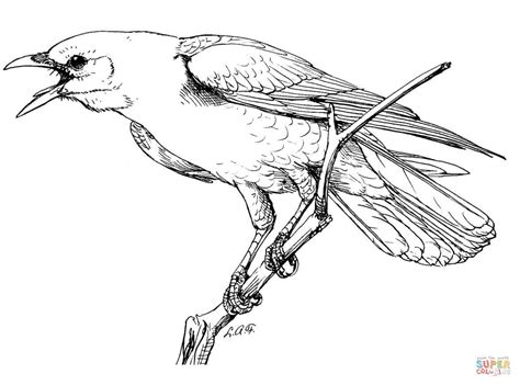 Crow Bird Coloring Page | crow bird coloring page coloring pages