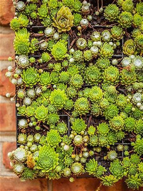 succulents plants adaptations for kids 10 best images about drought tolerant plants agave on