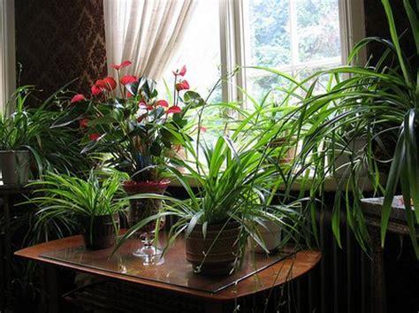 coole zimmerpflanzen indoor house plants winter care www coolgarden me
