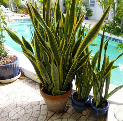 light indoor plants   decorate