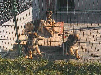 bettdecke wegziehen hier findet ihr fotos unseren hunden