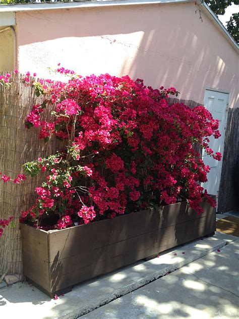 Flowers For Planter Boxes by 12 Outstanding Diy Planter Box Plans Designs And Ideas