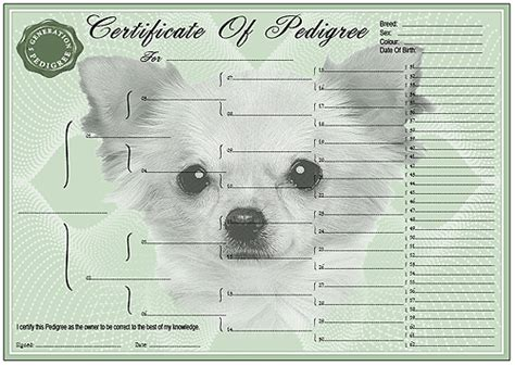 pedigree certificate template free chihuahua coat pedigree forms 3 4 and 5 generation