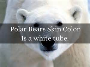 color of polar skin the polar by brinn