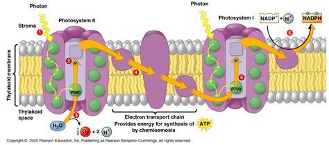 light reaction diagram mr smirk s bio 1 hub light reactions photosynthesis diagram