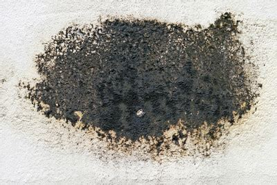 black mold images how to kill black mold