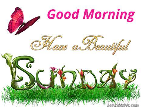 sunday good morning beautiful good morning have a beautiful sunday gif good morning