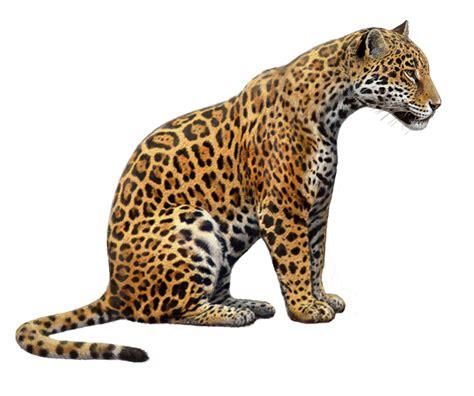 jaguar animal running drawing jaguars free