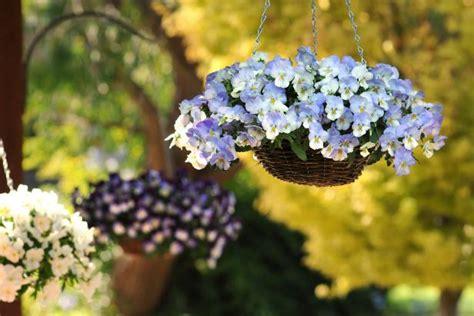great ideas  fall hanging baskets hgtv