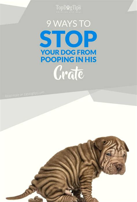 pooping in crate 9 ways to stop a from pooping in a crate top tips