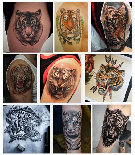 tiger tattoo designs meanings 15 best tiger designs and meanings with images