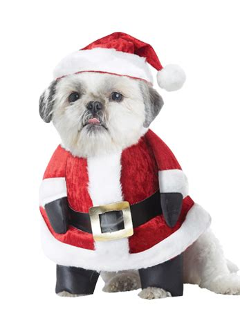 new year pet costume santa paws fancydogs co uk costumes for dogs