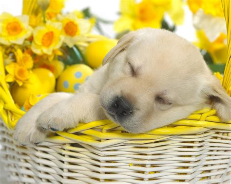 fiori immagini da scaricare sfondi desktop di cani da scaricare gratis per windows e